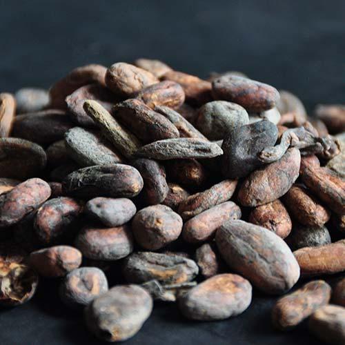 cacaobonen-metropolitan